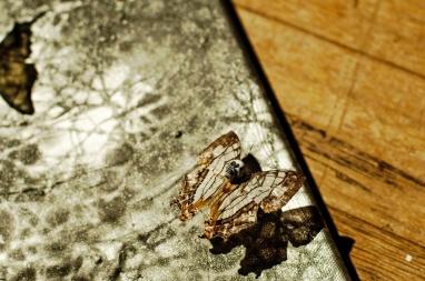 Photograph by Jean Cueta 2012